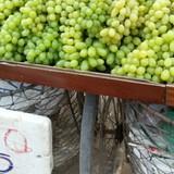 Thị trường 24h: Nho xanh Trung Quốc đổ bộ đường phố Sài Gòn