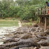 Thị trường 24h: Nước mắt… cá sấu