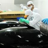 Thị trường 24h: Cá ngừ Việt Nam bị áp thuế cao tại Nhật, thị trường ô tô Việt tăng trưởng cao thứ hai thế giới
