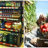 """Thị trường 24h: Hàng Việt """"nghẽn"""" đường vào siêu thị ngoại, khốn khổ vì giá cà chua rớt thảm"""