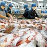 Mỹ áp thuế chống bán phá giá cá tra Việt Nam