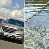 """Thị trường tuần qua: Sự """"trỗi dậy"""" của ô tô Hàn Quốc, mất trắng vì tôm chết hàng loạt"""