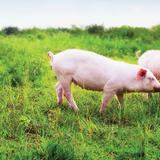 Masan Group lãi lớn nhờ bán bia và thức ăn chăn nuôi