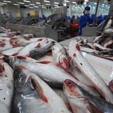 Xuất khẩu cá da trơn vào châu Âu: Cần giảm bớt trung gian