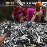 Nestlé bị tố sử dụng lao động nô lệ tại Thái Lan