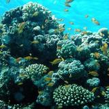Biển Đông: Những hòn đảo nhân tạo đang hủy diệt sự sống