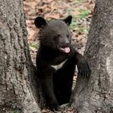 """Chú gấu nhỏ dọa ba ngàn quân nhân Phần Lan """"chết khiếp"""""""