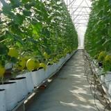 Gói tín dụng 100 nghìn tỷ đồng cho nông nghiệp áp dụng mức lãi suất bao nhiêu?