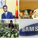 [Round-up] JICA Helps Vietnam Develop Agriculture, Google to Expand in Vietnam