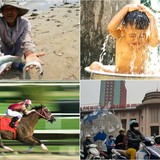 [Round-up] Water nearby Formosa Steel Mill Declared Safe, Hanoi to Have Horse Racing Track