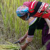 Vietnam Borrows $153 Million from WB to Bolster Rural Development