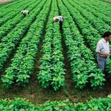 """""""Các đại gia nhảy vào nông nghiệp thì đừng bỏ rơi nông dân"""""""
