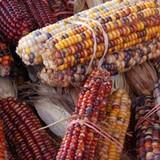 Mập mờ nguồn gốc thực phẩm biến đổi gen