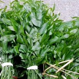 Đặc sản rau ngót rừng 150.000 đồng/kg vẫn đắt khách
