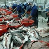 Tăng xuất khẩu cá tra qua Trung Quốc
