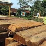 Bắt Trạm trưởng bảo vệ rừng vì tội...phá rừng!