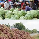 Tiêu thụ nông sản không thể trông chờ vào lòng trắc ẩn