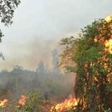 Hàng chục cảnh sát chữa cháy ở rừng phòng hộ