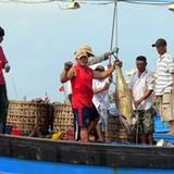 Giá cá ngừ đại dương lao dốc