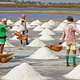 Diêm dân thua lỗ do giá muối giảm mạnh