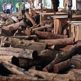 Bắt hơn chục khối gỗ lậu của một doanh nghiệp