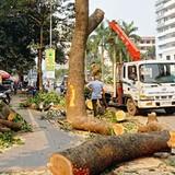 Hà Nội thừa nhận cây mỡ trên phố Nguyễn Chí Thanh