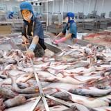 Xuất khẩu thủy sản 5 tháng đạt 2,4 tỷ USD, giảm 17%