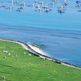 Dân đảo Lý Sơn ồ ạt đầu tư tiền tỷ nuôi thủy sản
