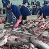 Doanh nghiệp thủy sản cần chủ động đáp ứng yêu cầu của EU