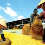 Thách thức lớn cho xuất khẩu nông sản Việt