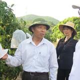 Triển khai các giải pháp tiêu thụ nông sản