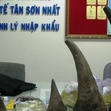 Sừng tê giác bị tiêm độc vẫn tuồn về Việt Nam