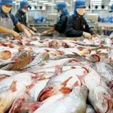 Tiền Giang kêu khó cho doanh nghiệp cá tra