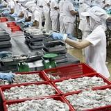Thị trường xuất khẩu lao đao vì tỷ giá
