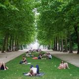 Sống gần cây xanh giúp tăng cường sức khỏe, giảm tỷ lệ mắc các hội chứng tim mạch