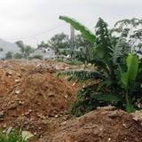 Gần 2.900 ha đất đã được chuyển đổi mục đích trái phép