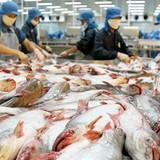 """Xuất khẩu cá tra sụt giảm: Nghị định 36 """"chưa hề"""" gây cản trở doanh nghiệp"""