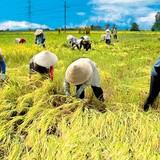 Mắt xích liên kết doanh nghiệp - nông dân