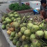 Dừa xiêm Bến Tre giá rẻ đổ bộ vỉa hè Hà Nội