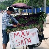 """""""Mận Sapa"""" tím bầm: Đích thị hàng Tàu đội lốt"""