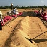 Đường đi cho hạt gạo