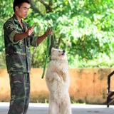 Dịch vụ dạy thú cưng đi đứng, ăn, ngủ đúng cách