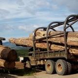 Liên tục phát hiện vận chuyển gỗ lậu quy mô lớn ở Tây Nguyên