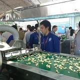 Công nghệ chế biến hạt điều Việt Nam lên ngôi
