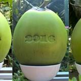300.000 đồng một trái dừa Tài Lộc chưng Tết