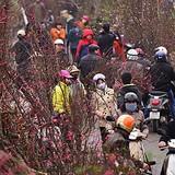 Ùn tắc nhiều km ở chợ hoa Tết nổi tiếng miền Bắc