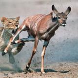 5 bài học cuộc sống chúng ta học được từ động vật
