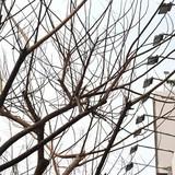 Hàng loạt cây xanh Sài Gòn nghi bị sát hại?