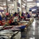 Cá chết bất thường: Hải sản ở Thanh Hóa cũng ế ẩm