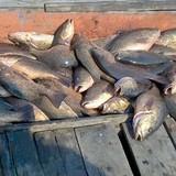 Cấm ăn hải sản vùng 20 hải lý gần bờ 4 tỉnh miền Trung